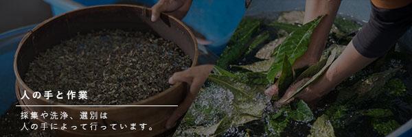 人の手と作業…採集や洗浄、選別は人の手によって行っています。 自然の恵みを受けた水…作業工程で使用する水は霧島連山の自然の恵みを受けた霧島裂か水